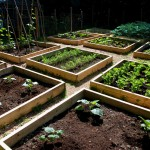 Raised Bed Home Garden