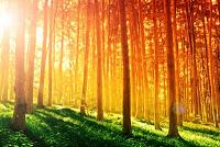 sunlight_amazing_properties