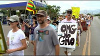 hawaii-anti-gmo-protest-3-3-2013