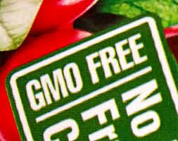 Vermont could be first US state to mandate GMO food labeling