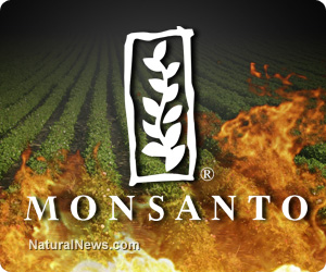 Monsanto-Fire-Flame-Crops