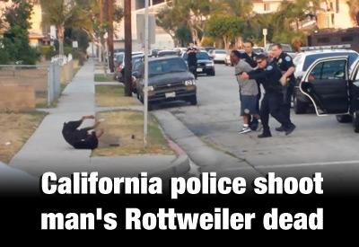 CA-Police-Shoot-Rottweiler-Dead-400