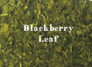 blackberry-leaf__large-300x219