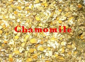 chamomile-300x219