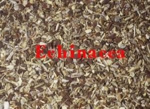 echinacea-300x219