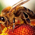 Bee-450x300