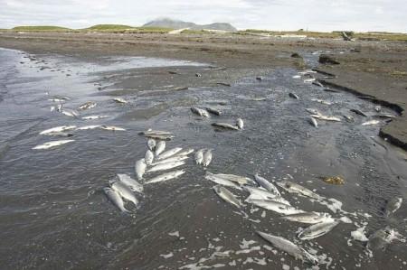 Fish-Deaths-450x299