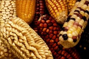 USDA-Corn-300x200