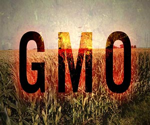 Hillary Clinton backs GMOs to the hilt