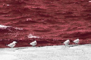 Fukushima? 5 Million Seabirds Estimated to Have Died on the Beaches of Australia and New Zealand