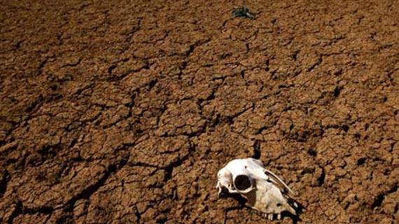 animal-skull-in-desert