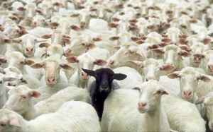 3 Things Sheeple Do That You Don't Have To