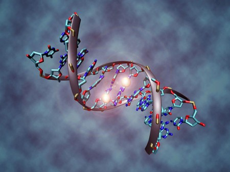 DNA-Photo-by-Christoph-Bock-450x337