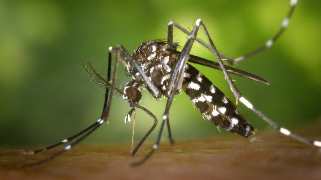 http://www.thedailysheeple.com/wp-content/uploads/2014/05/mosquito-1024x576.jpg