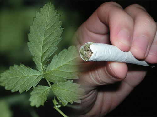 leafjoint