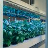 click-n-grow-smart-farm