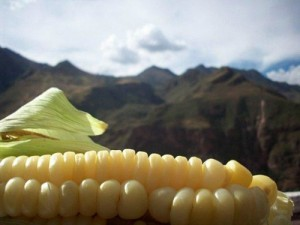 Dear Farmers: U.S. is Now Importing Organic Corn to Satisfy Consumer Demand