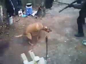 Shocking Video: Disabled Homeless Man's Dog Was Shot by Ft. Worth Police