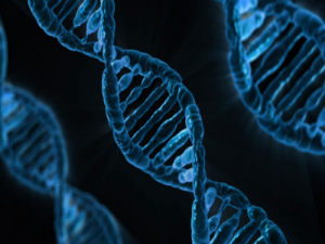 How Genetic Engineering Could Ruin the Human Race