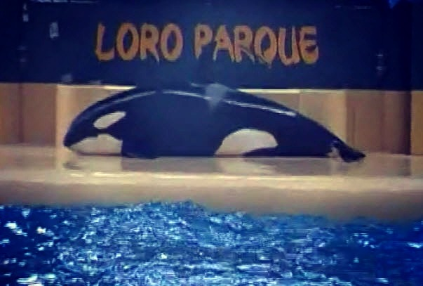orcasuicide