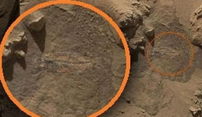 Mars_Curiosity_Rover-fossilizedfish
