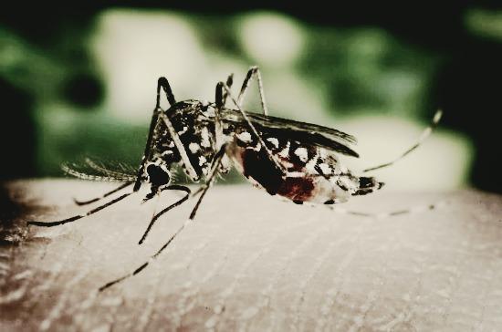 Mosquito-creepy