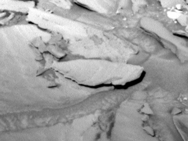 fish-fossil-on-mars