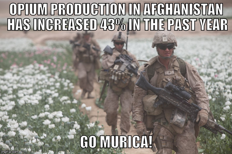 poppy fields afghanistan meme