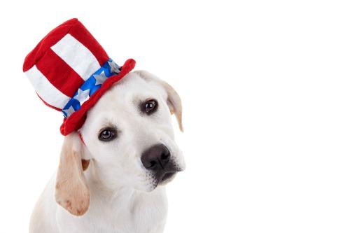 dog-voting