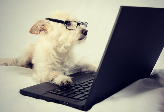 dog-on-a-laptop-funny