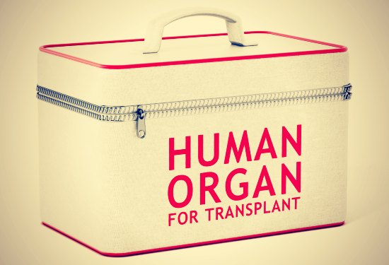 Human organ for transplant box. 3D illustration.