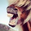 horse wikimedia