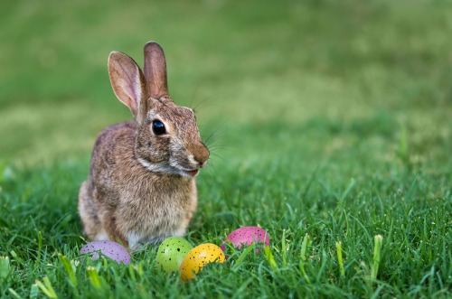 Cute bunny and colorful Easter eggs in the grass