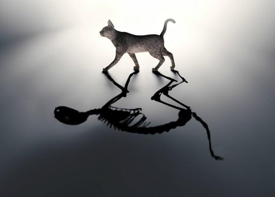 Schrodinger's cat - dead and alive