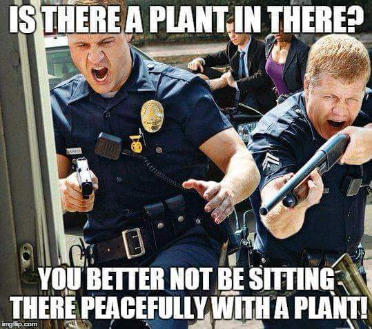 plant weed - Victimless Crimes