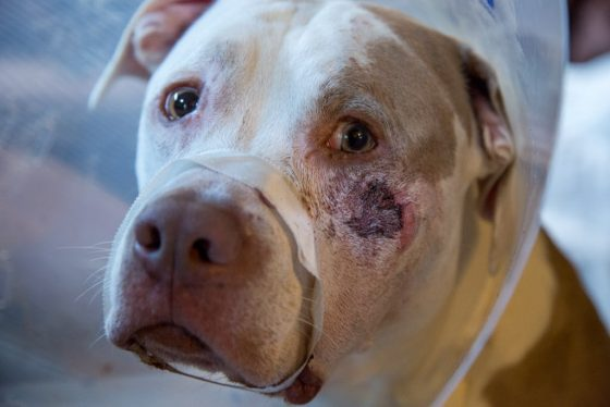 Ciroc suffered from a broken jaw and is recovering from the bullet he took to his face