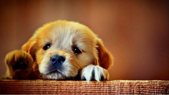 really sad puppy
